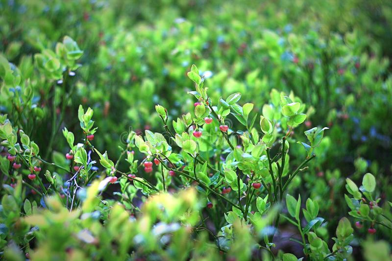 Bed of Green Leaf Plant royalty free stock photo