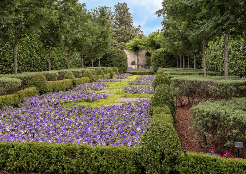 Bed of purple petunias and hedges, Dallas Arboretum and Botanical Garden. Pictured is a bed of purple petunias surrounded by hedges at the Dallas Arboretum. The royalty free stock photos