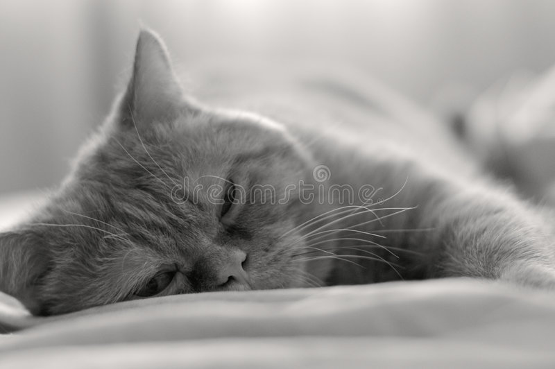 Download Bed relaxation stock photo. Image of gray, detail, hair - 3195788
