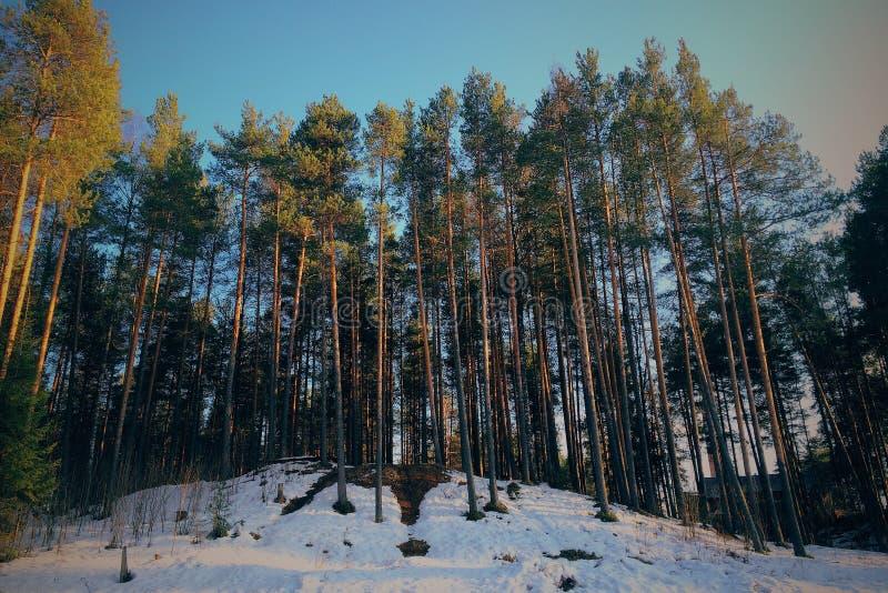 bed stammen för trees för treen för solskenet för fjädern för växter för blommaskoggreen royaltyfri bild