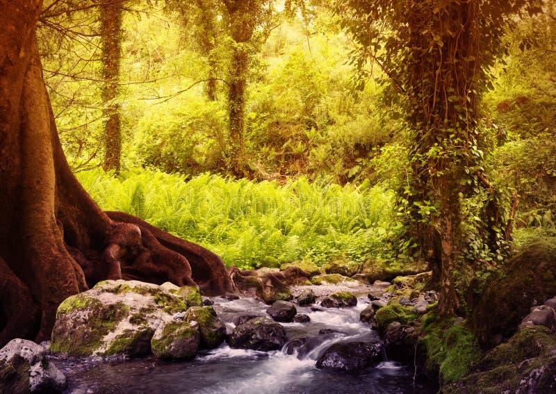 bed stammen för trees för treen för solskenet för fjädern för växter för blommaskoggreen Filtrerad bild: varmt kors bearbetad tap arkivfoto