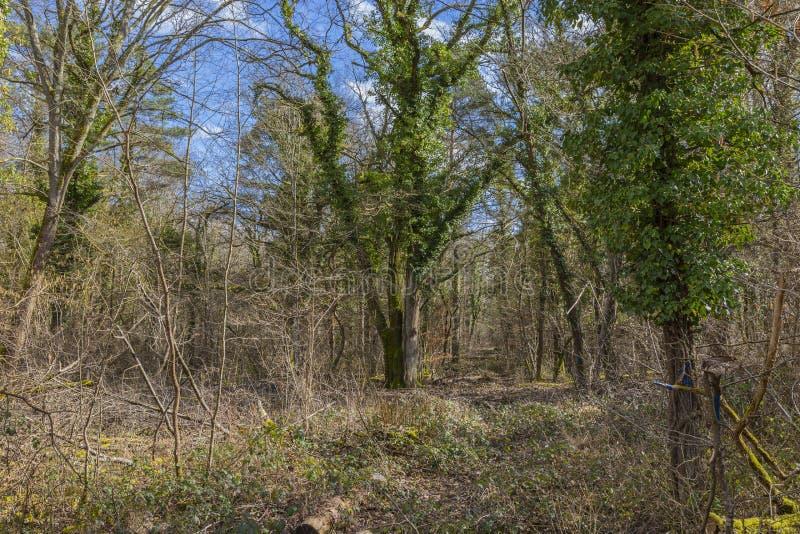 bed stammen för trees för treen för solskenet för fjädern för växter för blommaskoggreen royaltyfria bilder