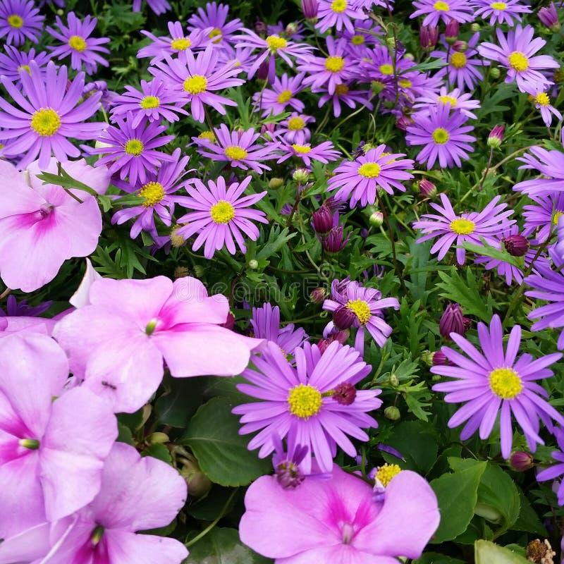 Bed van bloemen stock foto