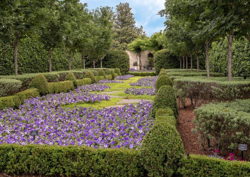 Bed van purpere petunia en hagen, Dallas Arboretum en Botanische Tuin royalty-vrije stock foto's