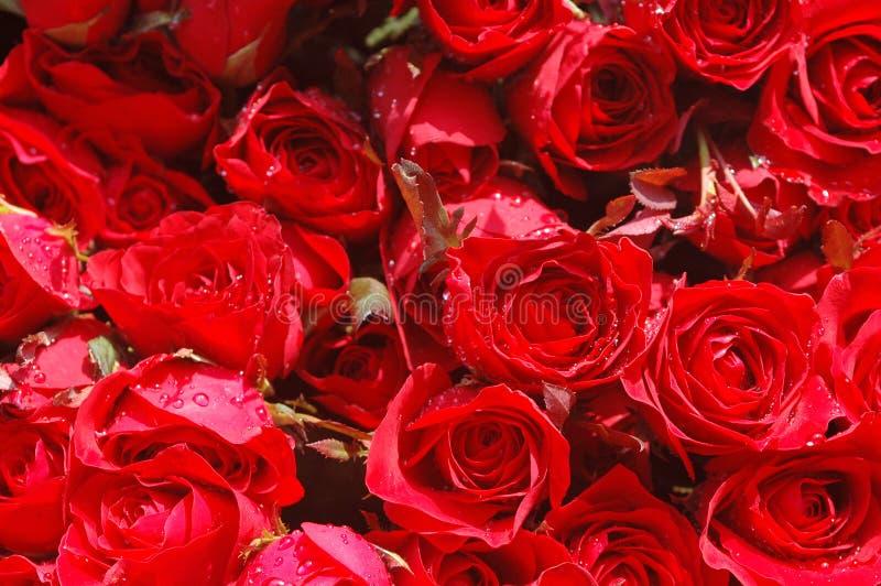 Bed van rode rozen stock fotografie
