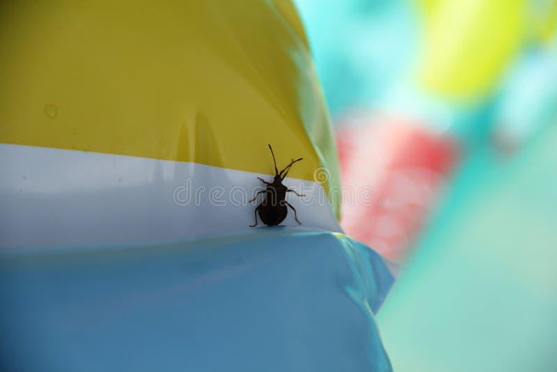 Bedbug κάθεται σε έναν κύκλο στοκ εικόνα με δικαίωμα ελεύθερης χρήσης