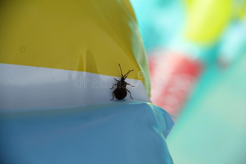 The bedbug sits on a circle royalty free stock image