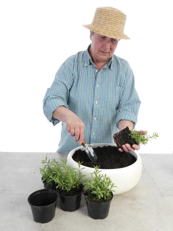 Download Bedding out stock photo. Image of planting, elderly, botany - 31041080