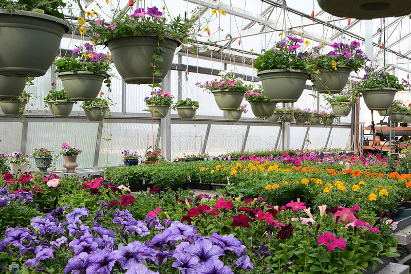 Bedding Plants in Color stock photos