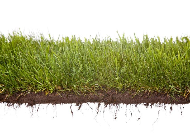 Bedecken Sie Dewdrops mit Gras stockfotografie