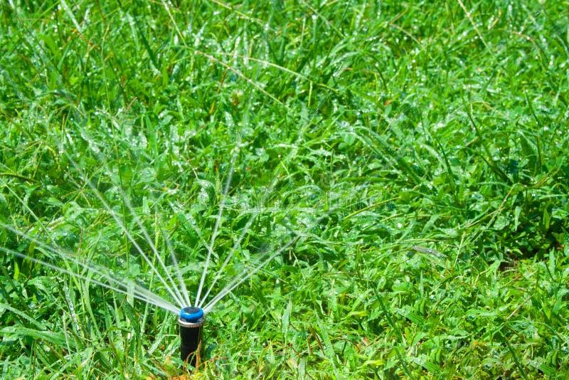 Bedecken Sie die Spur und Bewässerungsdose mit gras, die auf weißem Hintergrund getrennt werden lizenzfreies stockfoto