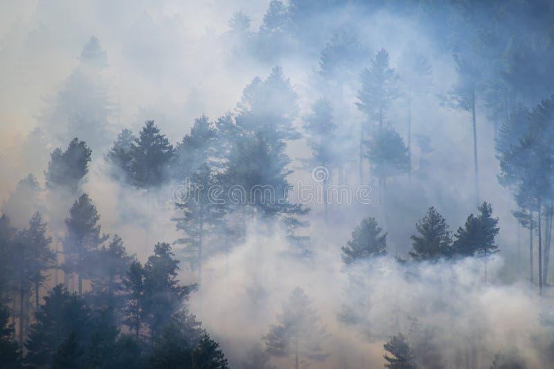 Bedeckungswald des dichten Nebels verblaßte Farben lizenzfreie stockfotografie