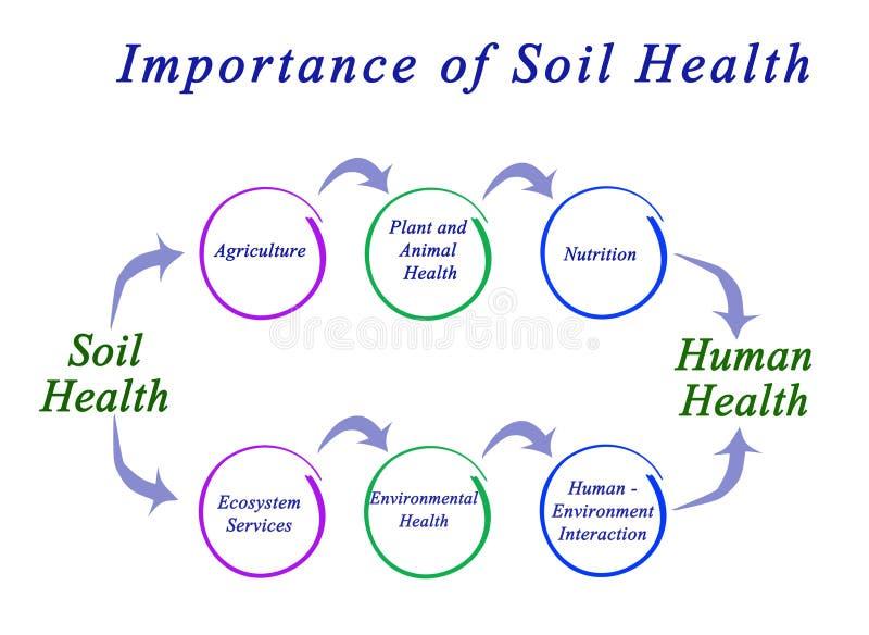 Bedeutung der Boden-Gesundheit vektor abbildung