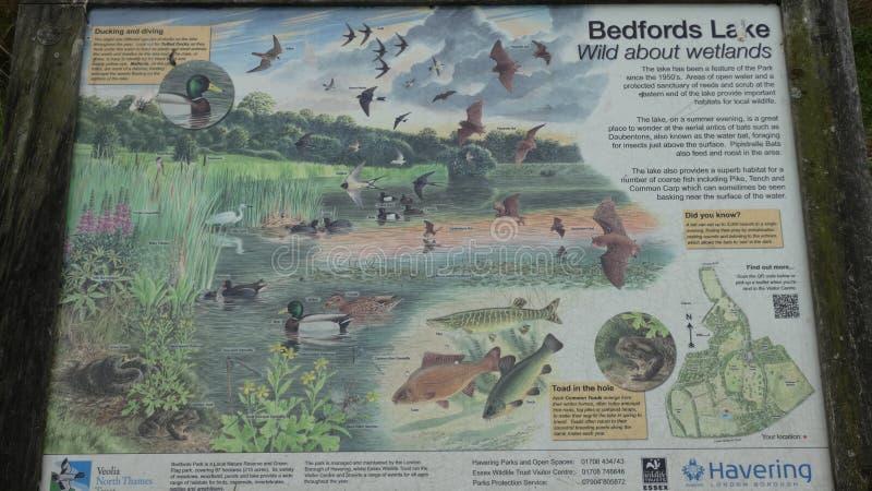 Bedford Park Lake London Borough di Havering fotografia stock