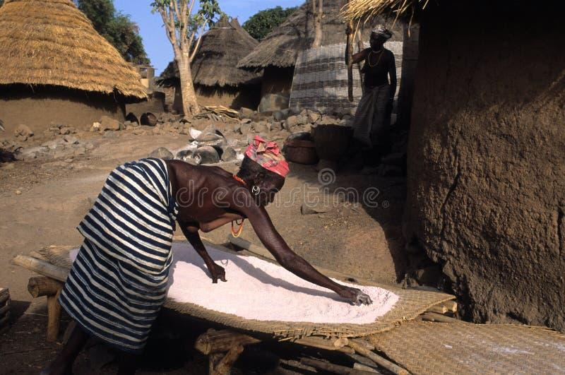 BEDIKS - Senegal royalty-vrije stock foto