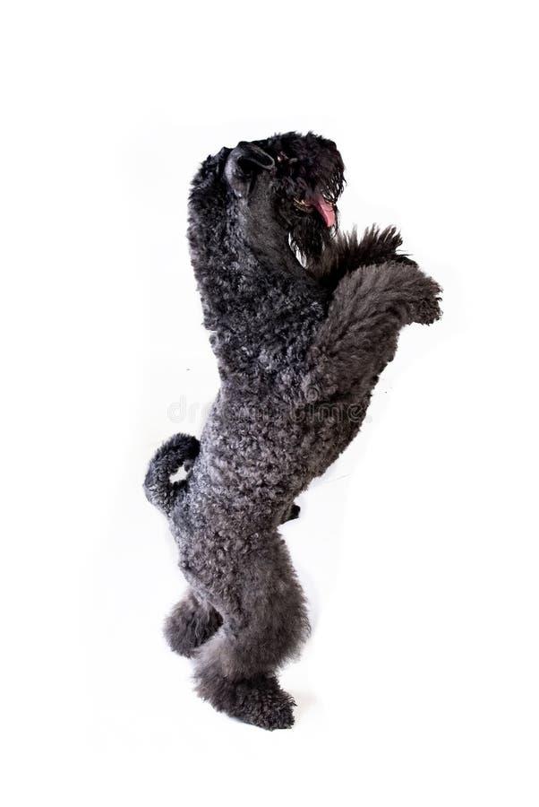 bedjande hund arkivfoto