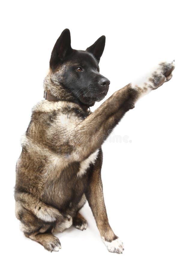 bedjande hund arkivbild