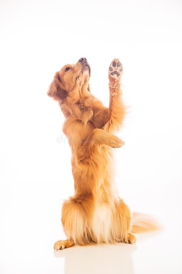 bedjande hund royaltyfria foton