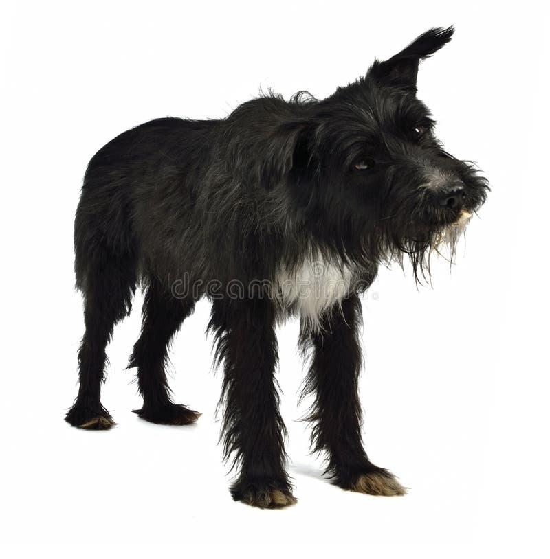 bedjande hund hans smakliga munmellanmål royaltyfri foto
