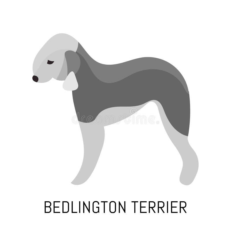Bedlington terrier. Dog, flat icon. Isolated on white background. royalty free illustration