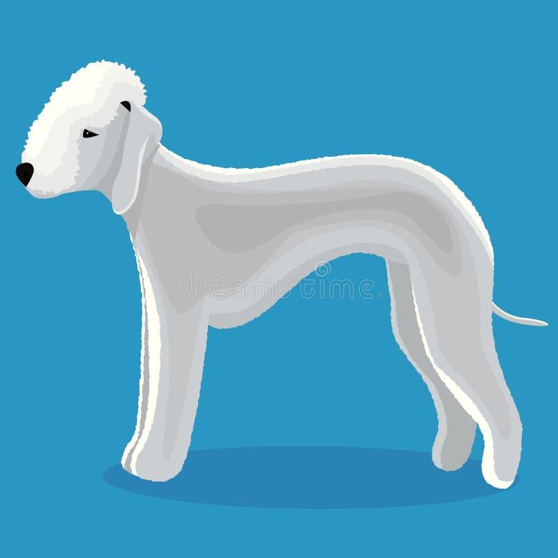 Bedlington terrier dog stock illustration