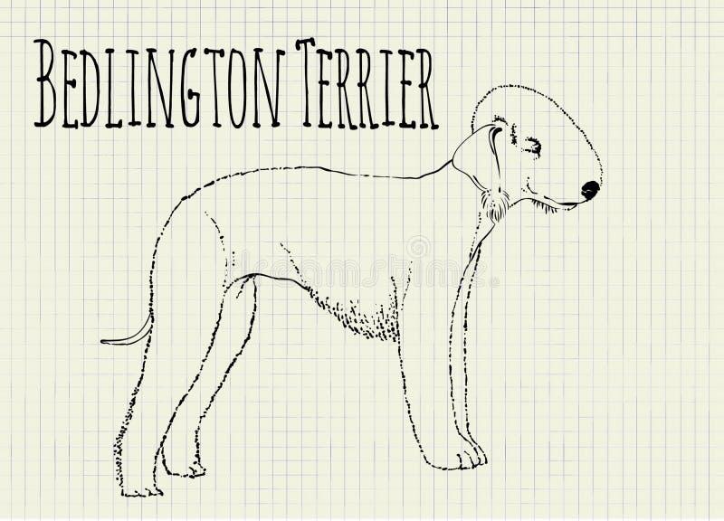 Bedlington terrier drawing on notebook sheet vector illustration