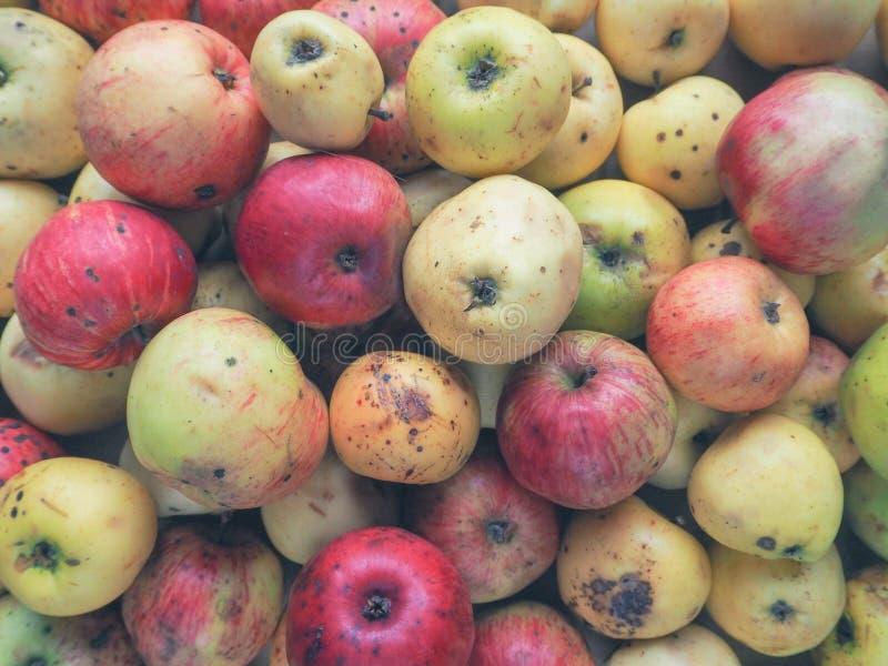 Bedorven appelen beneden de maat Achtergrond van van wilde appelen stock afbeeldingen