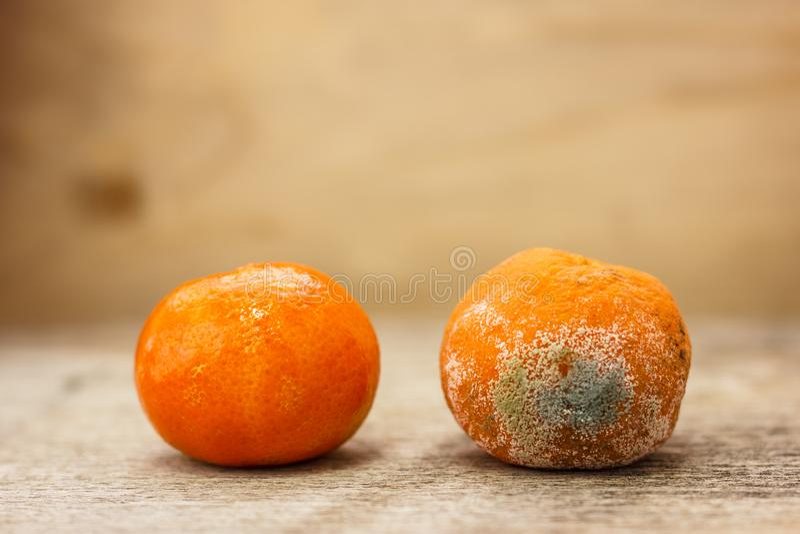 Bedorven beschimmelde rotte mandarijn naast een rijpe en mooie mandarijn houten lijst stock afbeelding