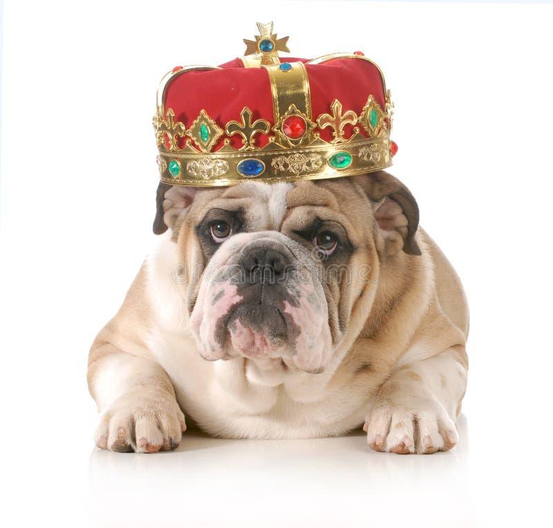 Bedorven hond royalty-vrije stock foto's