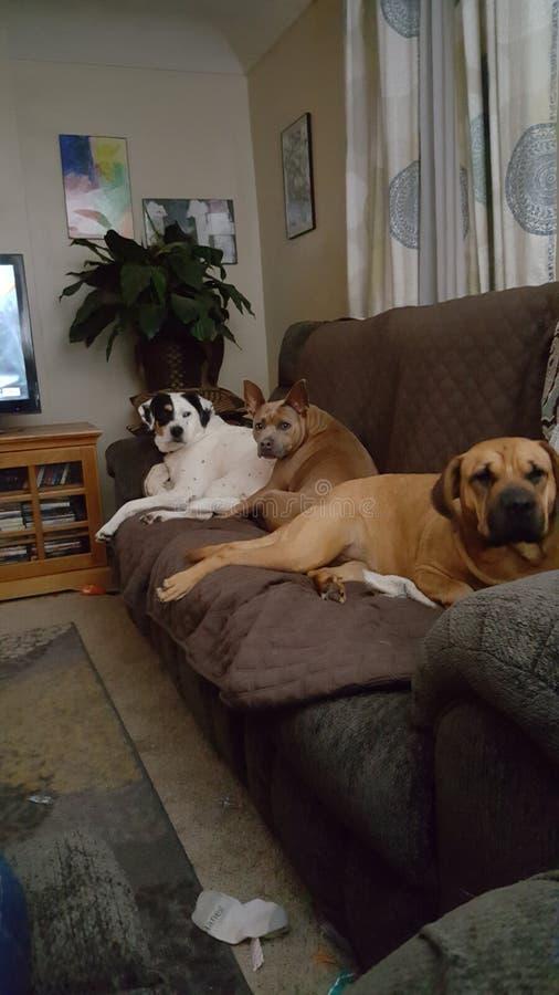 Bedorven hondenbabys stock foto