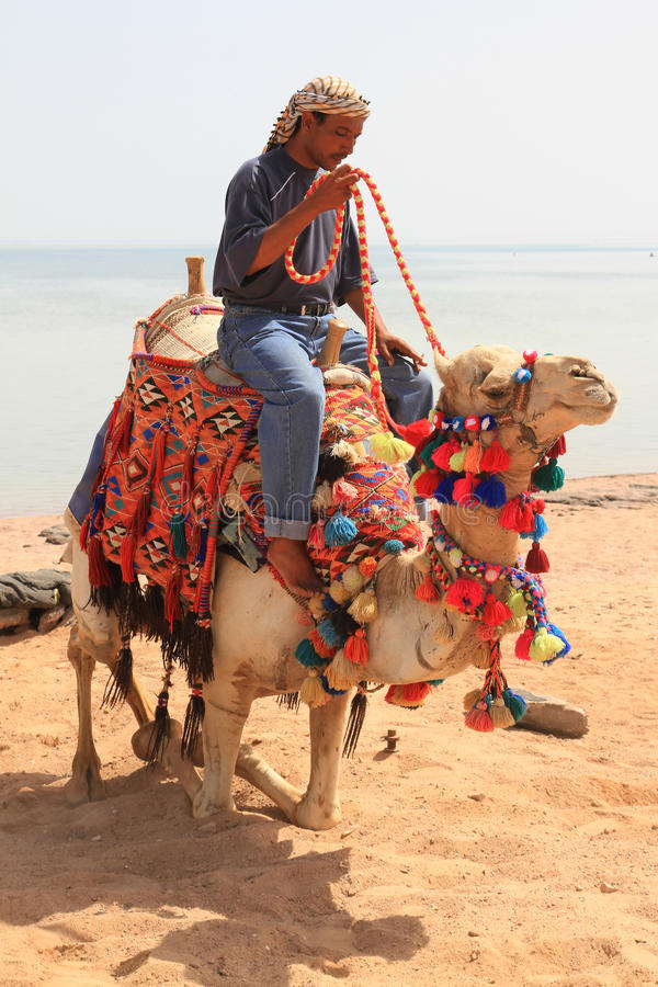 Download Bedouin on the camel stock photo. Image of heat, eastern - 13733260
