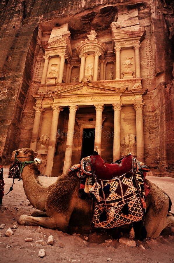 Bedouin camel rests near the treasury royalty free stock photo