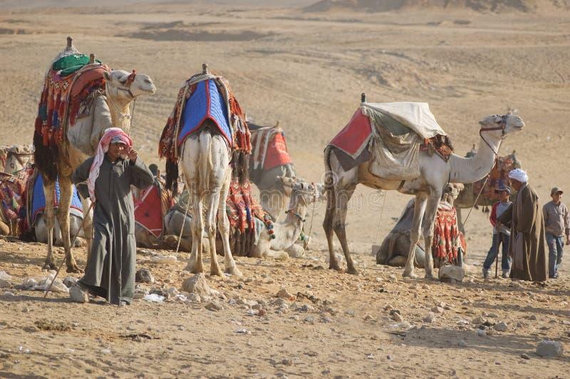 Bedouin e cammelli fotografie stock libere da diritti