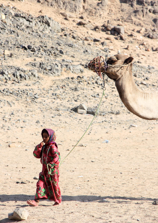 The Bedouin girl in national dress walking with a camel in the desert. royalty free stock photo