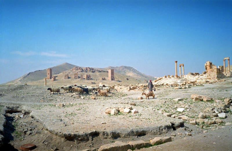 Bedouin herder, Palmyra, Syrië royalty-vrije stock afbeeldingen