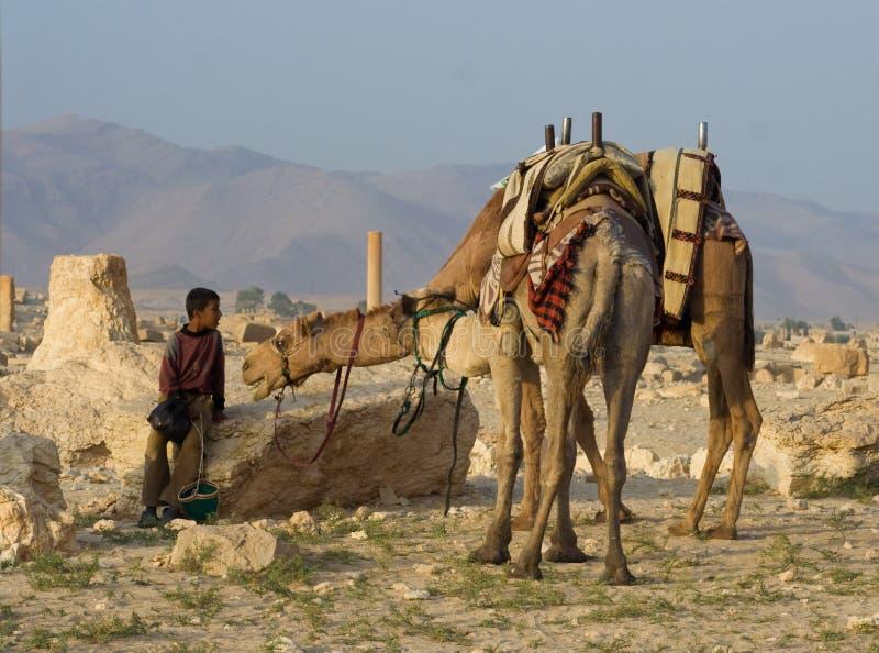 Bedouin jongen en kameel royalty-vrije stock foto's