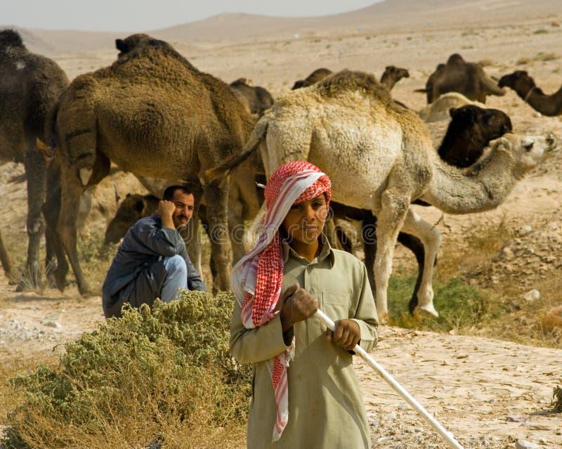 Bedouin kameeltrein, Syrië stock foto