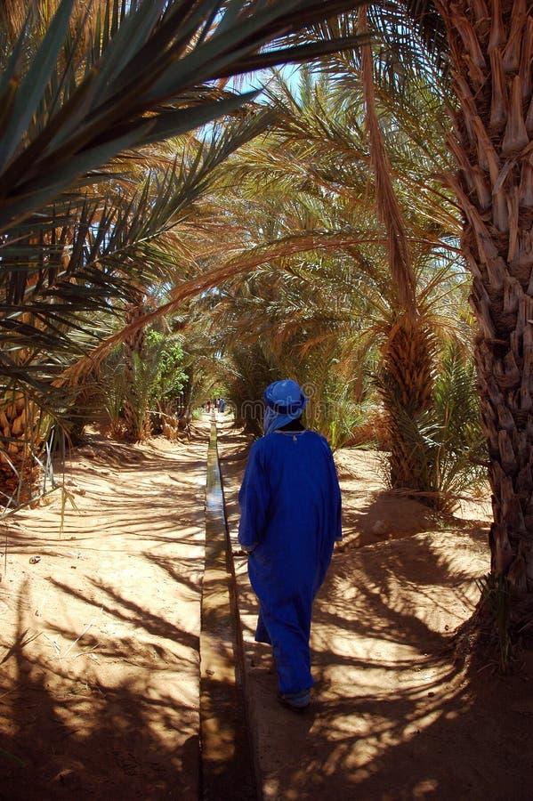 Bedouin mens in oase stock afbeelding