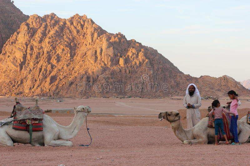 Bedouin nomads. Egyptian Bedouin nomads of the desert. family and domestic camels