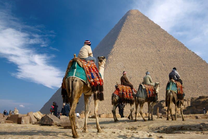 Bedouin op kameel dichtbij van de piramide van Egypte stock afbeeldingen
