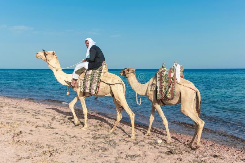 Bedouin su un cammello fotografie stock