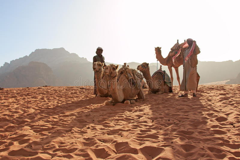Bedouins preparing the camels for the tourist that will ride them at sunset in the Wadi Rum desert, Jordan. Wadi Rum, Jordan - March 24,2015: Bedouins preparing royalty free stock photo