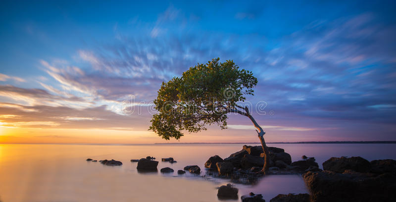 Bedrägerifjärd, Queensland fotografering för bildbyråer