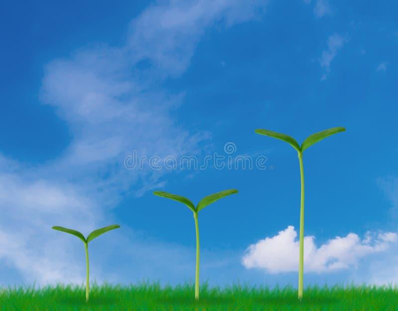 Bedrijfs de Groeiconcept, Ecologie royalty-vrije stock fotografie