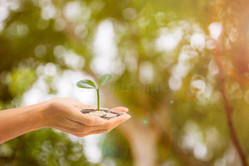 Bedrijfs en financi?nconcept De holdingsinstallatie van de mensenhand het groeien op stapel muntstukken met groene aard als achte stock fotografie