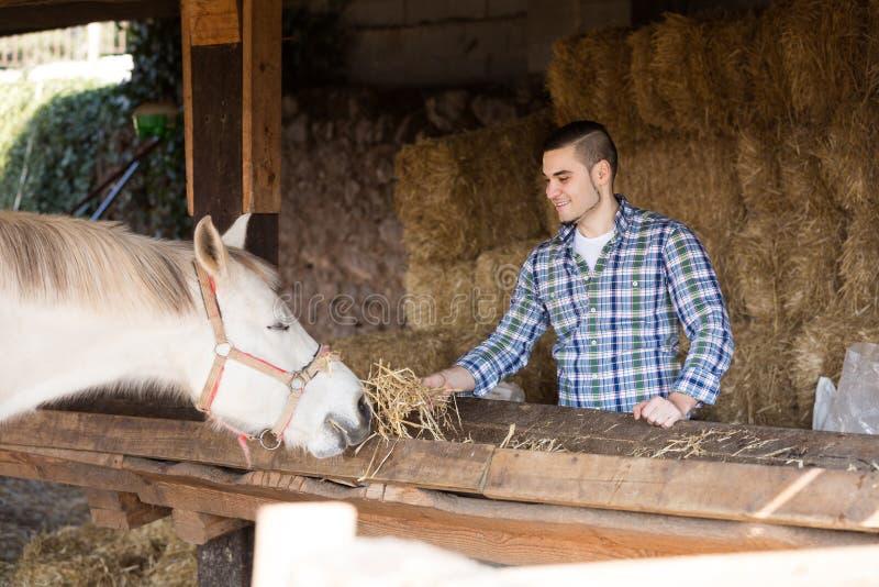 Bedrijfsmedewerker voedende paarden stock afbeelding
