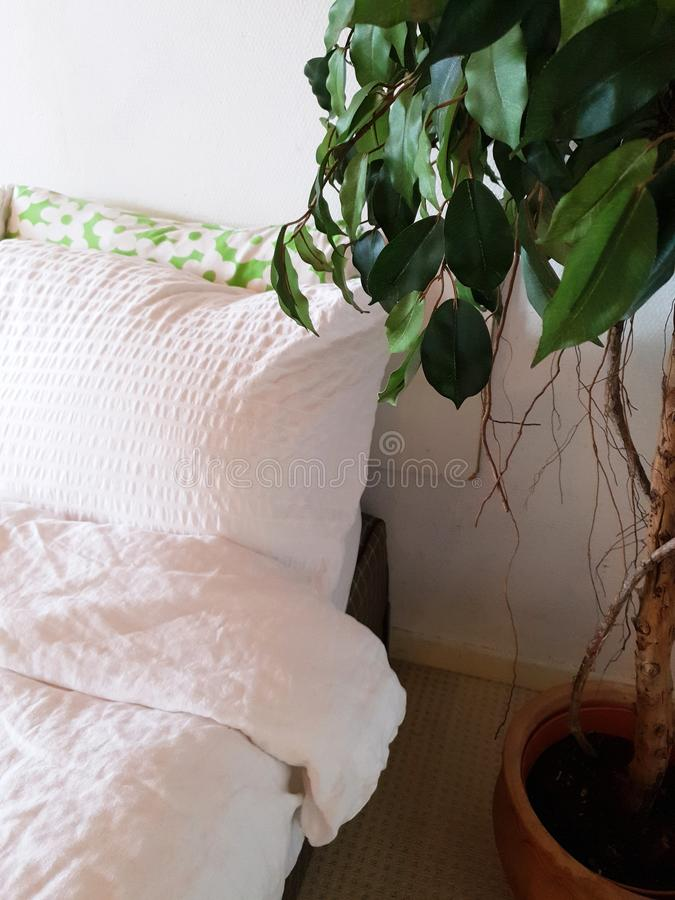 Bedroom white linen and green house plant, modern design close-up stock photography