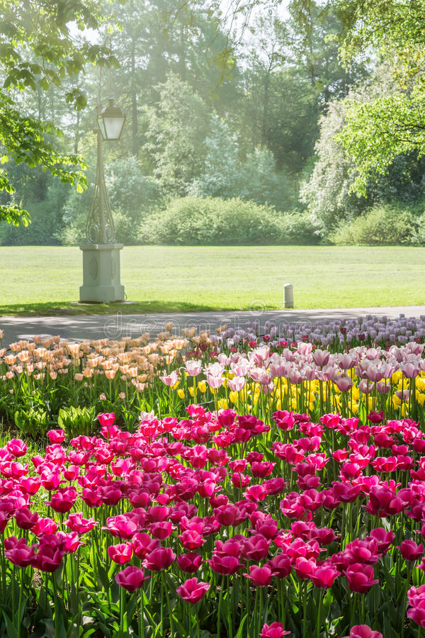 Beds with tulips in spring park. On Elagin Island in Saint-Petersburg, Russia royalty free stock image