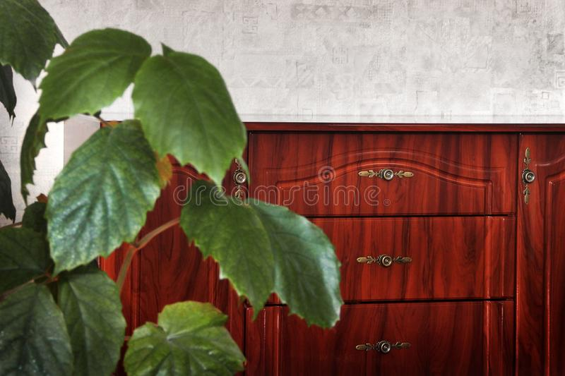 Bedside table in the house. Plant in the foreground royalty free stock photos