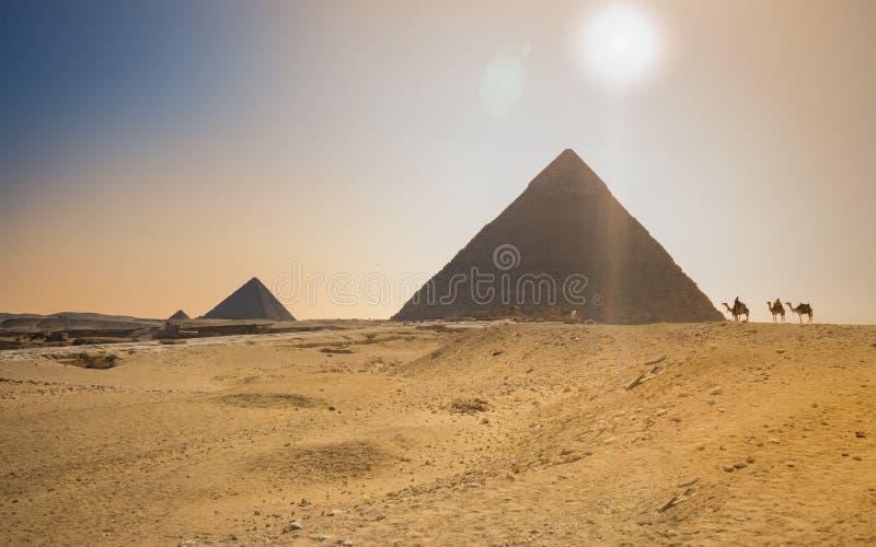 Beduíno no camelo perto das pirâmides no deserto imagens de stock royalty free